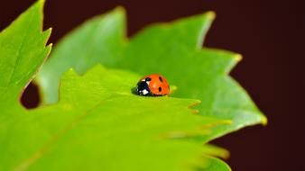 Nature insects ladybirds Wallpaper