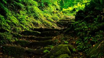 Nature leaves stairways moss ferns wallpaper