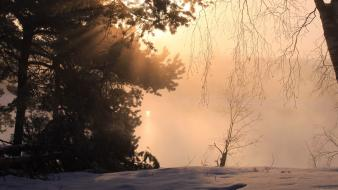 Sunset winter snow trees fog wallpaper