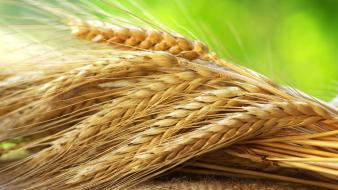 Fields grain farming rye Wallpaper
