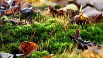 Leaves moss ground wallpaper