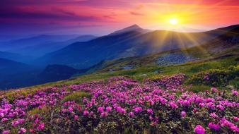 Mountains nature sun flowers shining hills skies wallpaper