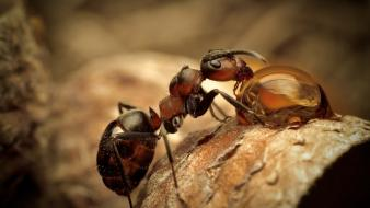Nature animals ants wallpaper
