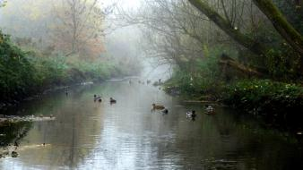 Nature love england ducks birmingham natural wallpaper