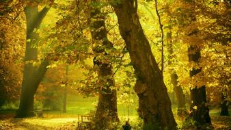 Nature trees forest bench autuum Wallpaper
