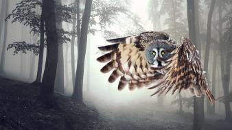 Trees animals owls birds wallpaper