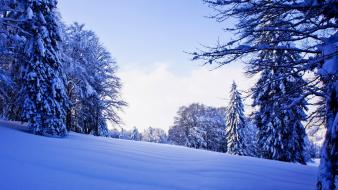 Winter snow trees forest walk Wallpaper