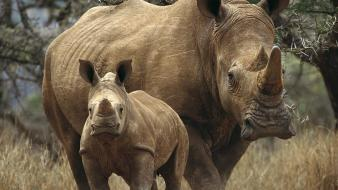World animals rhinoceros baby wallpaper