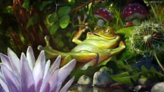 Animals funny frogs wallpaper