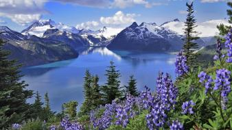 British columbia lakes purple flowers lake garibaldi wallpaper