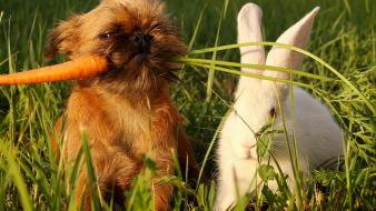 Bunnies dogs puppies carrots baby animals wallpaper
