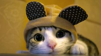 Cats animals funny big eyes hats wallpaper