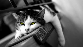 Cats animals tired wallpaper