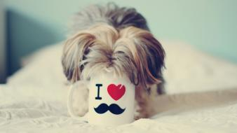Dogs funny mustache pet Wallpaper