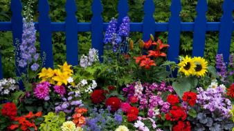 Flowers washington picket fence wallpaper