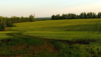 Green landscapes nature agriculture wallpaper