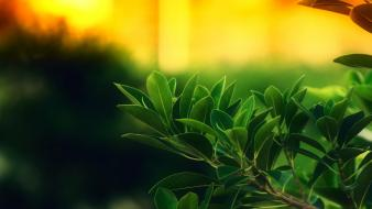 Green leaves Wallpaper