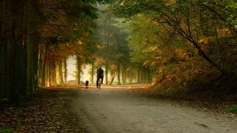 Landscapes bike trees parks skate autumn wallpaper
