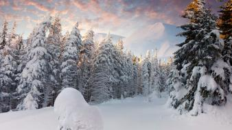 Landscapes snow pine trees wallpaper