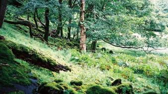 Landscapes trees forest stones europe scotland moss wallpaper