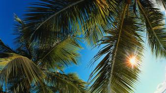 Palm trees caribbean wallpaper