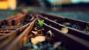 Plants railway wallpaper