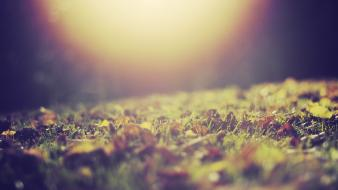 Sunlight macro depth of field ground fallen wallpaper