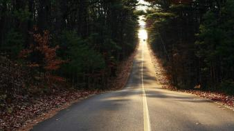 Trees forest cars leaves path roads way Wallpaper