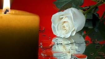 Water flowers candles roses white wallpaper