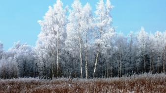 Winter snow grass frost gray hair hoarfrost wallpaper