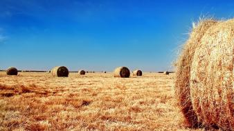 Yellow fields hay straws contrast farm skies wallpaper