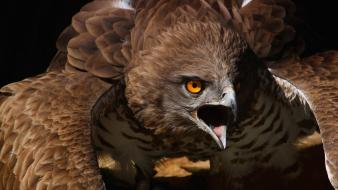 Eagles birds bird of prey wallpaper