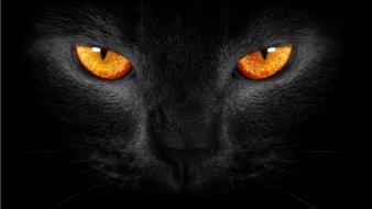 Fire black cat yellow eyes wallpaper