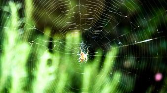 Green nature leaves web spider webs wallpaper