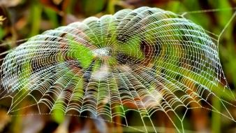 Insects spiders spider webs Wallpaper