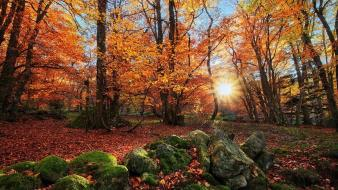 Landscapes nature trees forest fields france autumn wallpaper