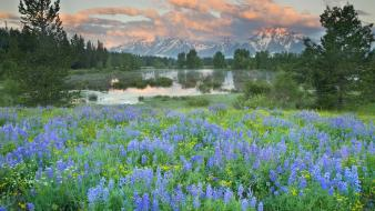Landscapes nature wyoming grand teton national park wildflowers wallpaper