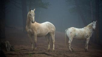 Nature animals horses colorado wallpaper