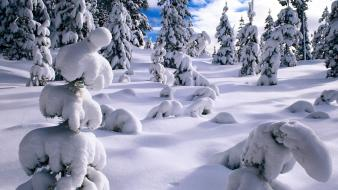 Nature snow pine trees wallpaper