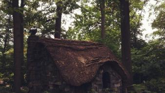 Trees forest cottage wallpaper
