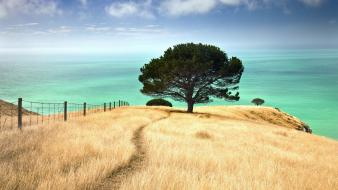 Trees new zealand bay canterbury wallpaper