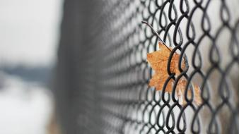Fences leaves mesh chain link fence wallpaper