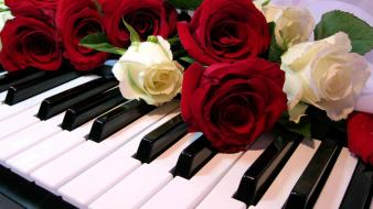 Floor piano roses Wallpaper