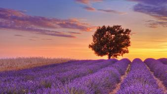 France english lavender provence wallpaper