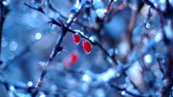 Ice winter bokeh depth of field berries branches wallpaper