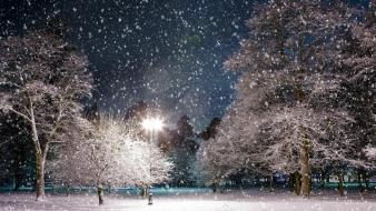 Light landscapes nature winter snow trees night parks wallpaper
