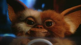 Movies gremlins gizmo movie stills wallpaper