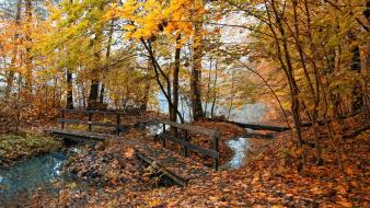 Nature trees yellow wood leaves bridges autumn wallpaper