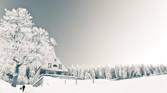 Nature winter snow trees houses roads wallpaper