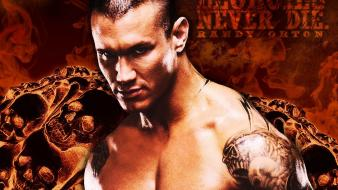 Wwe world wrestling entertainment wallpaper